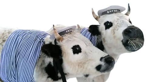 Оотой и Тоотой, быки-близнецы  / Неотразимые