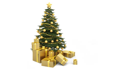 Рождественское дерево, вечнозеленое растение  / Популярное