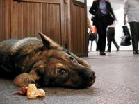 Собаки в метро: чтобы быть сытым, достаточно правильно лечь