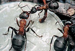 У нас с муравьями многие ценности общие