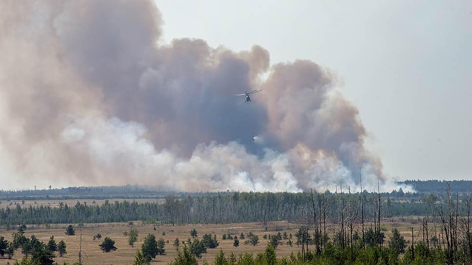 «Россия — мировой лидер по потерям лесов в основном из-за пожаров»