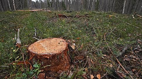 Лесорубы пришли впереди решения  / Что происходит в Наро-Фоминске вокруг строительства мусоросжигательного завода