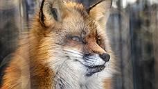 Госдума вернулась к запрету контактных зоопарков