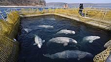 «Нужно к каждому киту подходить индивидуально»