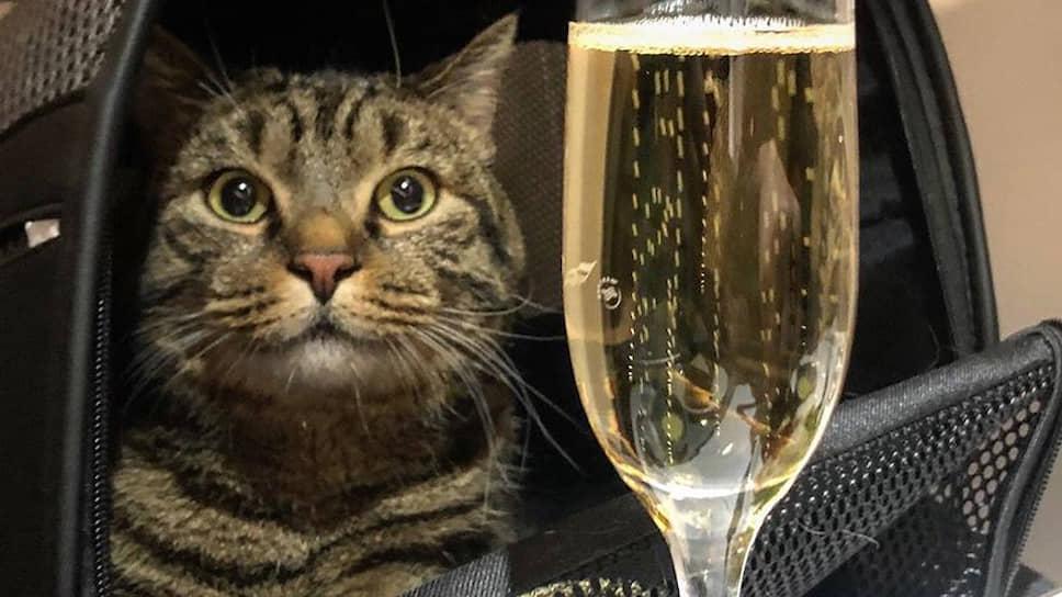 """Как коту Виктору утроили """"масленицу"""""""