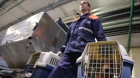 Животные прибавят в весе // Могут ли авиаперевозчики изменить нормы провоза питомцев