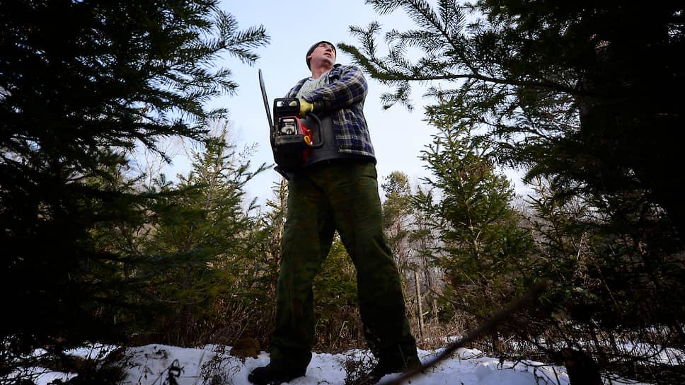 Почему власти Подмосковья разрешили рубить елки к Новому году