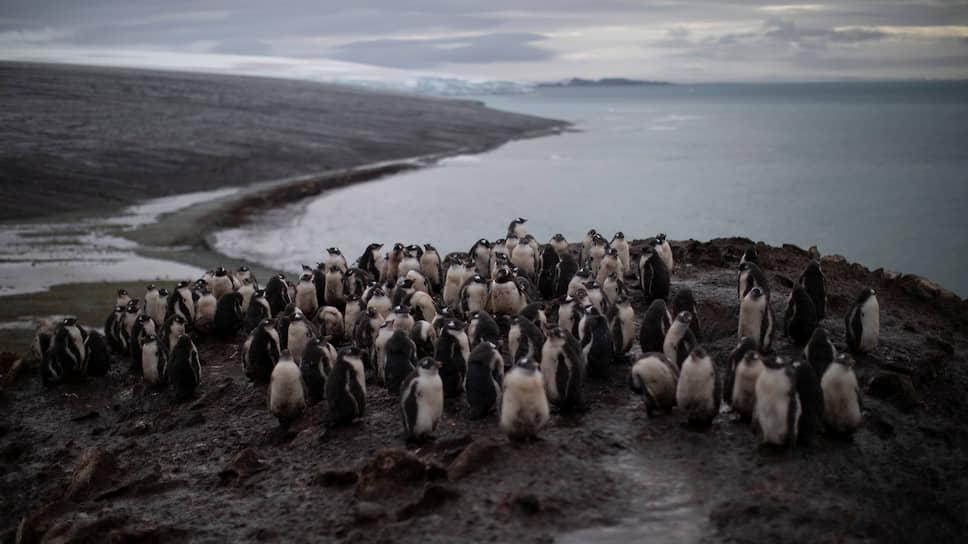 Почему температура на Южном полюсе продолжает повышаться