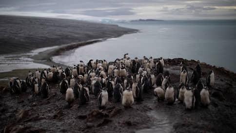 Климатические изменения подогрели Антарктиду // Почему температура на Южном полюсе продолжает повышаться
