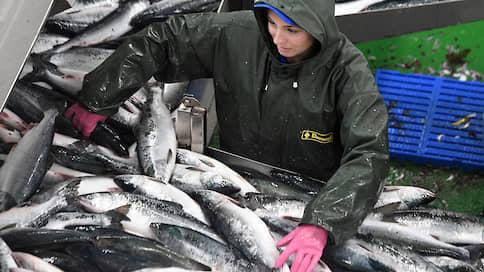 Рыбу выловят на аукционах // К каким последствиям может привести реализация предложения ФАС