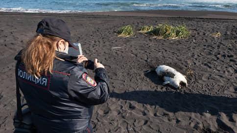 Камчатке назначили пробы и проверки  / Что могло стать причиной загрязнения воды и гибели животных
