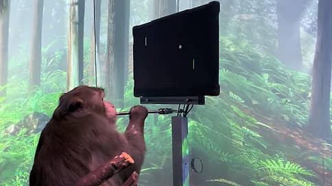 Сила мысли поддалась обезьяне // Какие возможности перед человечеством откроют нейросети