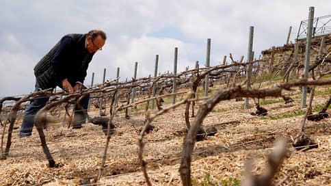 Климат «пригубил» французское вино // Возникнут ли проблемы с поставками в Россию