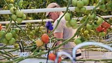 Овощи удобрят компенсациями