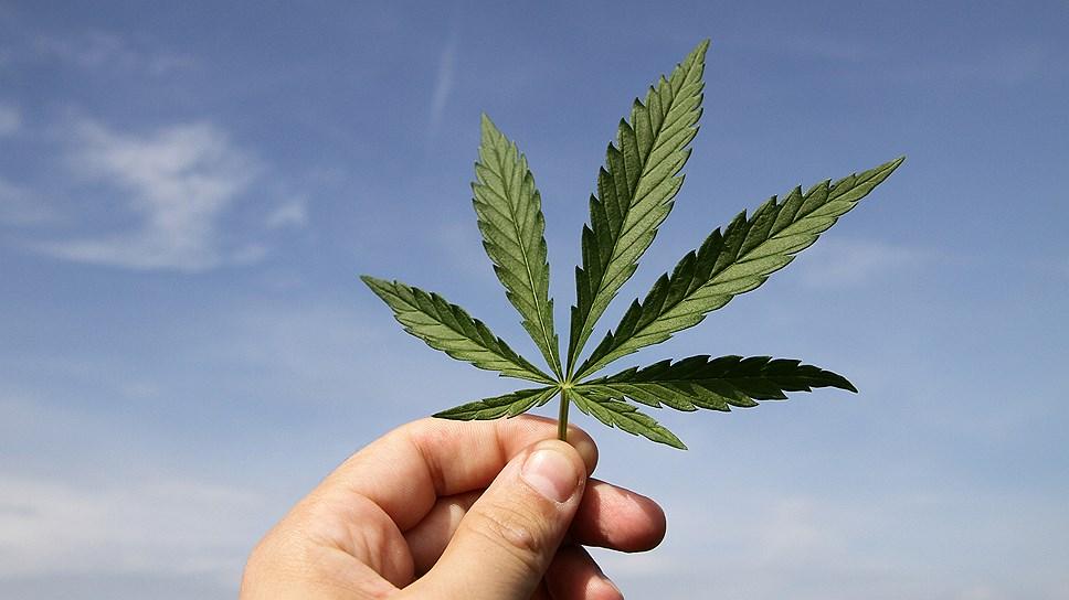 Конопля аналоги какие удобрения купить для марихуаны