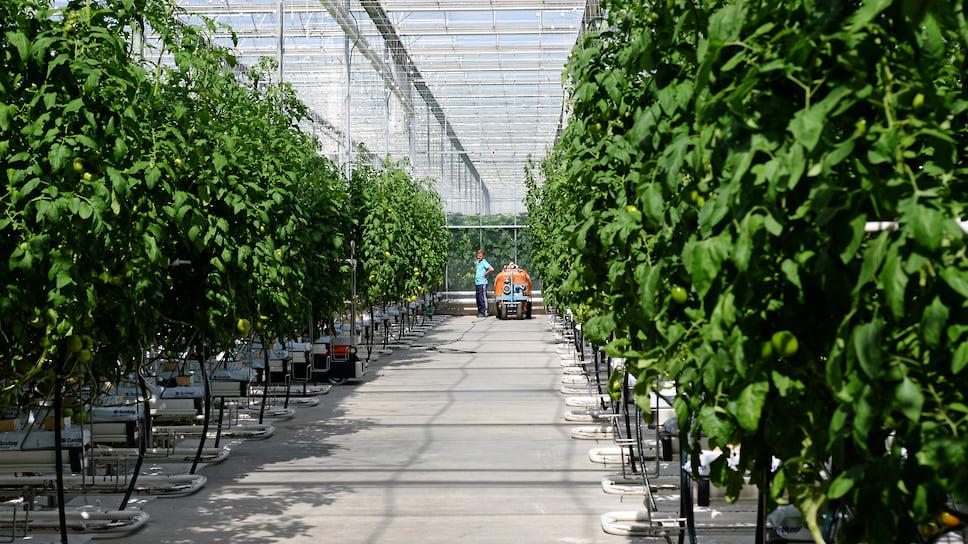 В «Горном» будут добывать овощи / В Усть-Катаве запустили крупнейший на Урале агрокомплекс
