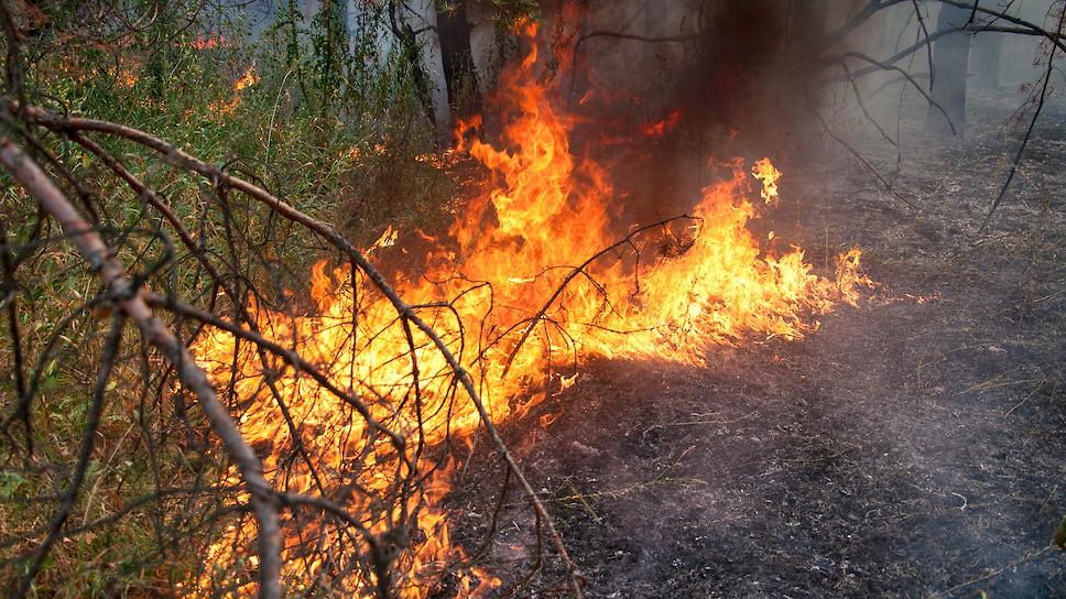 Пожарная небезопасность / В Челябинской и Курганской областях выявили проблемы с готовностью к сезону лесных возгораний