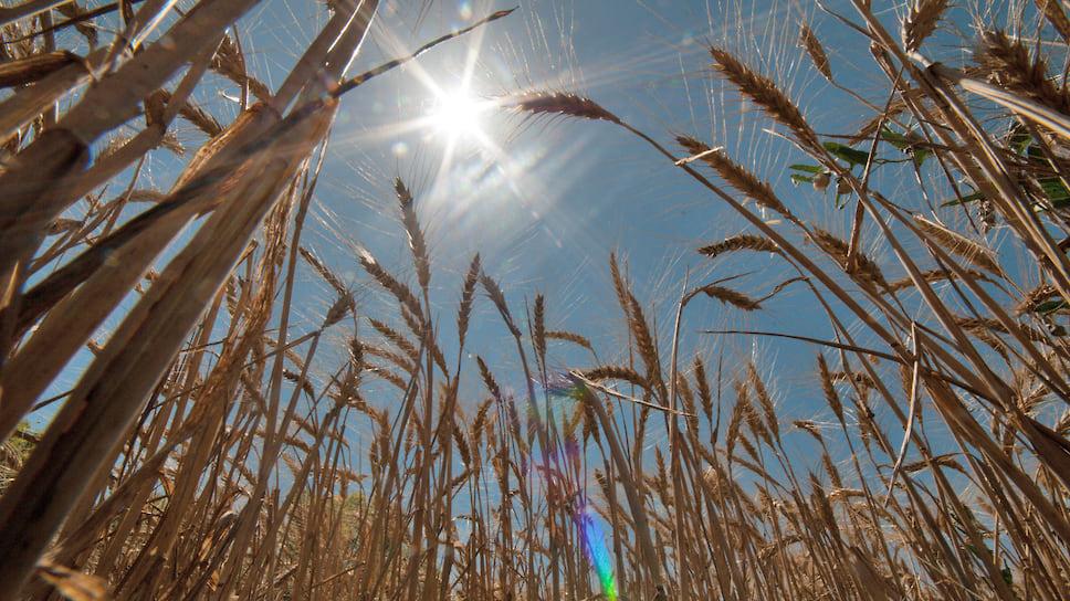 Аграрии проигрывают всухую / В Челябинской области чрезвычайная ситуация из-за жары и отсутствия дождей