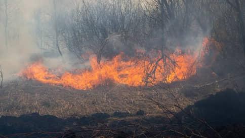 В Тюменской области из-за лесных пожаров ввели режим ЧС
