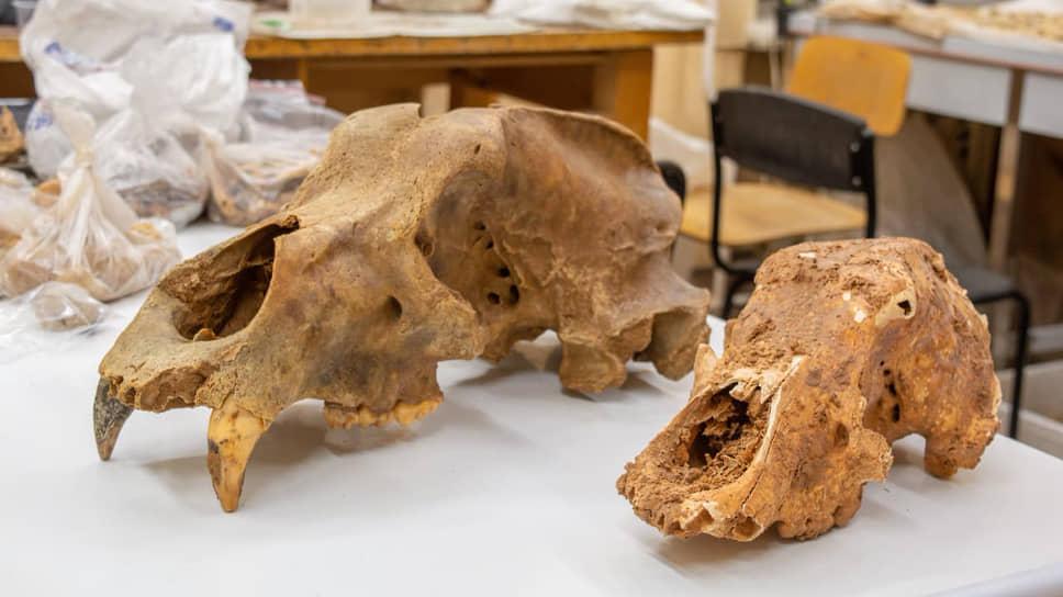 Найденные черепа