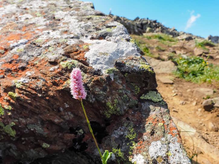 Среди камней прорастают цветы