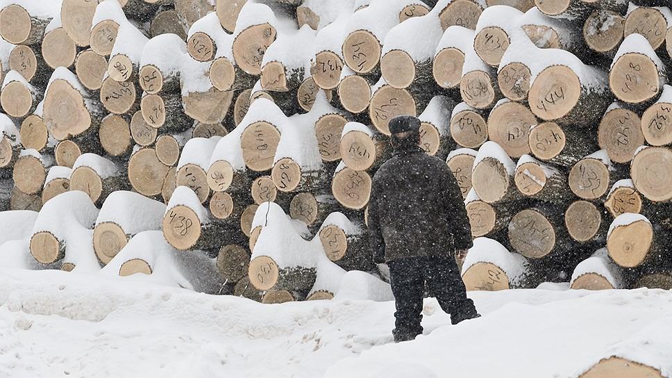 Как в Удмуртии представили концепцию развития лесного хозяйства