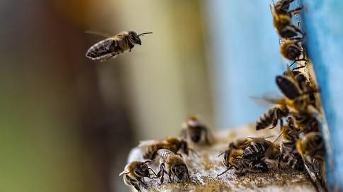 Пчелы попали в рапство  / Пасечники в Удмуртии терпят убытки из-за новых случаев гибели ульев от химикатов