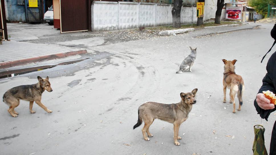 Безнадзорных животных будут возвращать впрежние места обитания