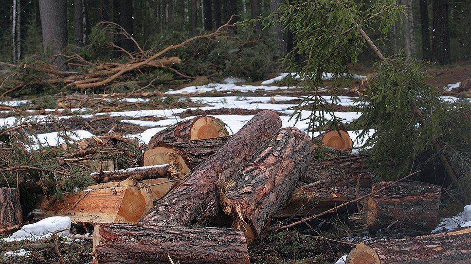 Низкое качество купленных лесных участков чуть не довело «Аркаим» до банкротства
