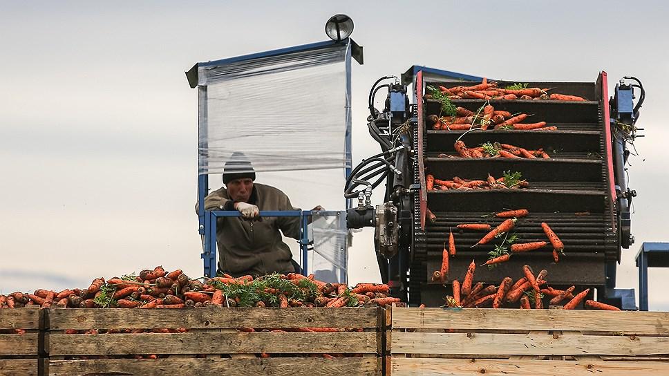 Краевые власти говорят о недостатке овощехранилищ в условиях роста объема выращиваемой продукции