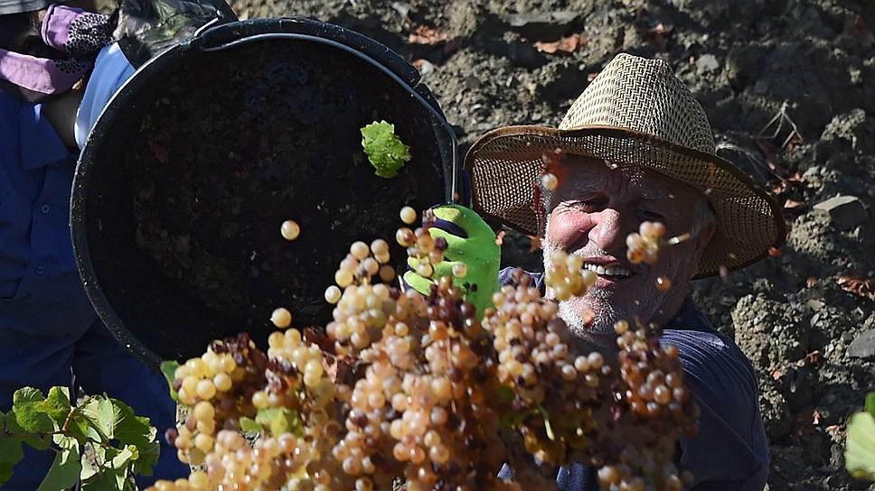 Как производителям вина указали на место