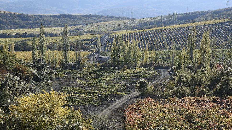 К 2021 году площадь виноградников на Кубани планируют увеличить с нынешних 26,6 тыс. га до 31 тыс. га