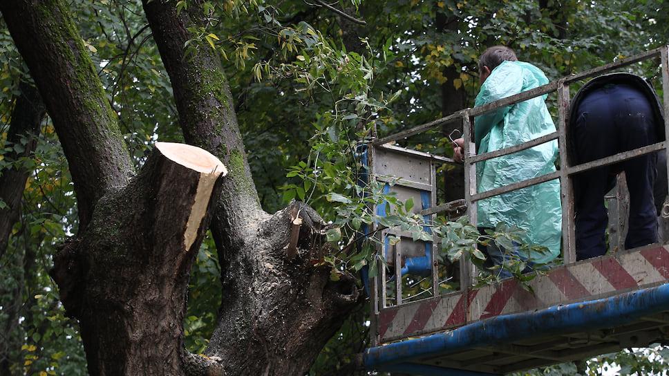 В Краснодаре подлежит вырубке 12 тыс. деревьев: после масштабного обследования они признаны аварийными