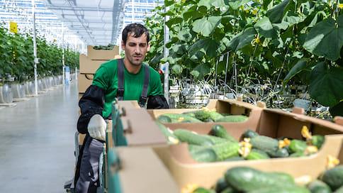 Карантин попортил сбыт  / Кубанские фермеры жалуются на невозможность реализовывать продукцию в условиях изоляции