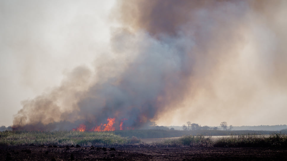 Два крупных возгораниях сухой растительности на плавнях произошли в Приморско-Ахтарском районе Краснодарского края. Причиной возгораний мог стать человеческий фактор, а именно – начало охотничьего сезона.