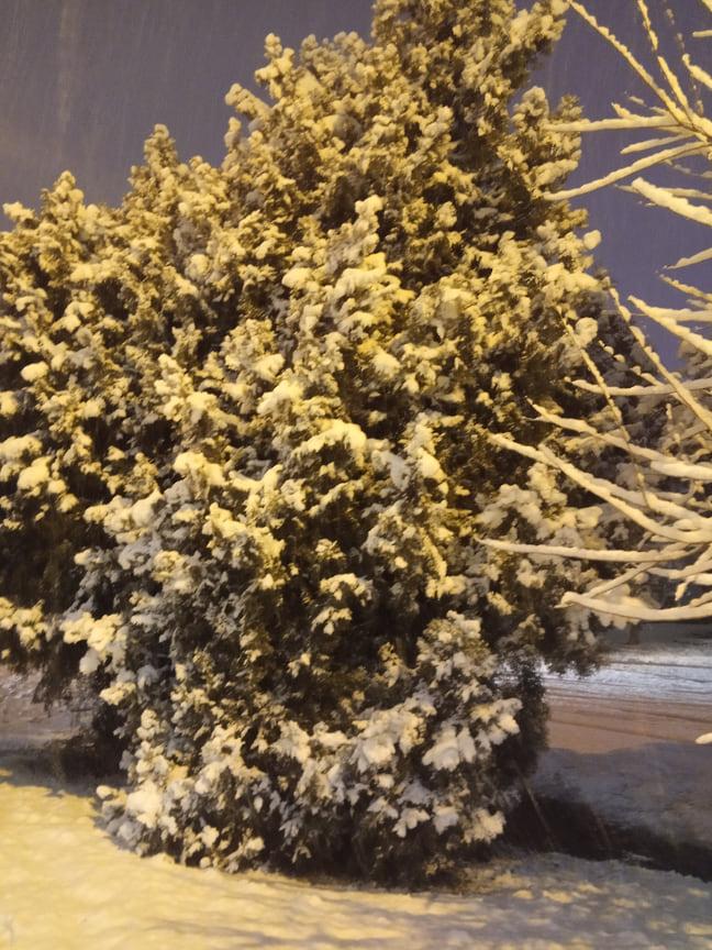 Такого обильного снегопада Краснодар не видел давно. За ночь в городе выпало 20 см снега.