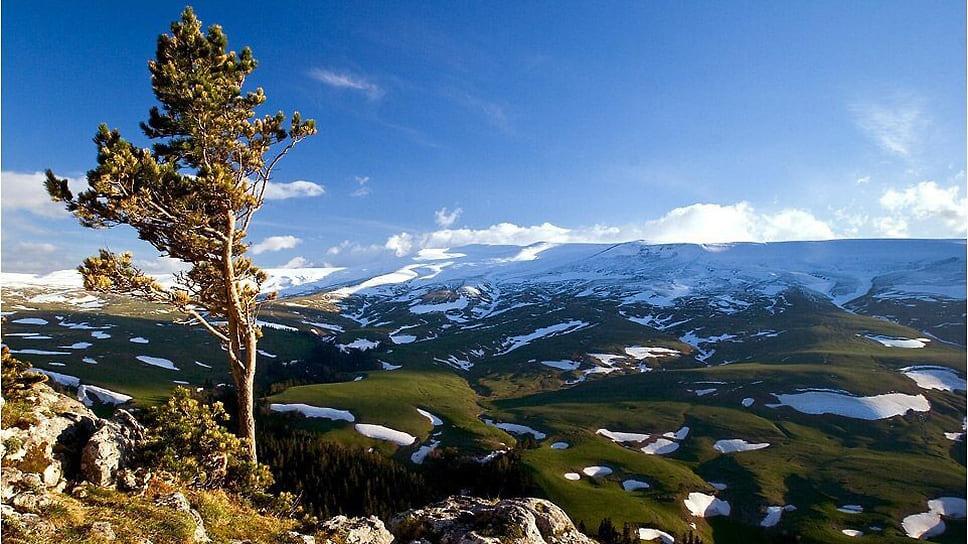 В пределах плато по долинам рек сохранились реликтовые самшитовые леса