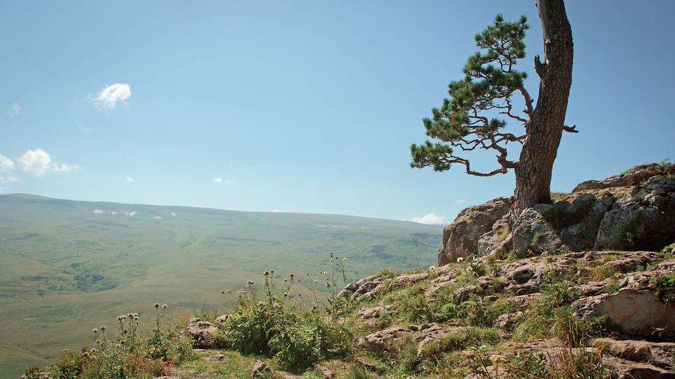 Одинокое дерево на плато