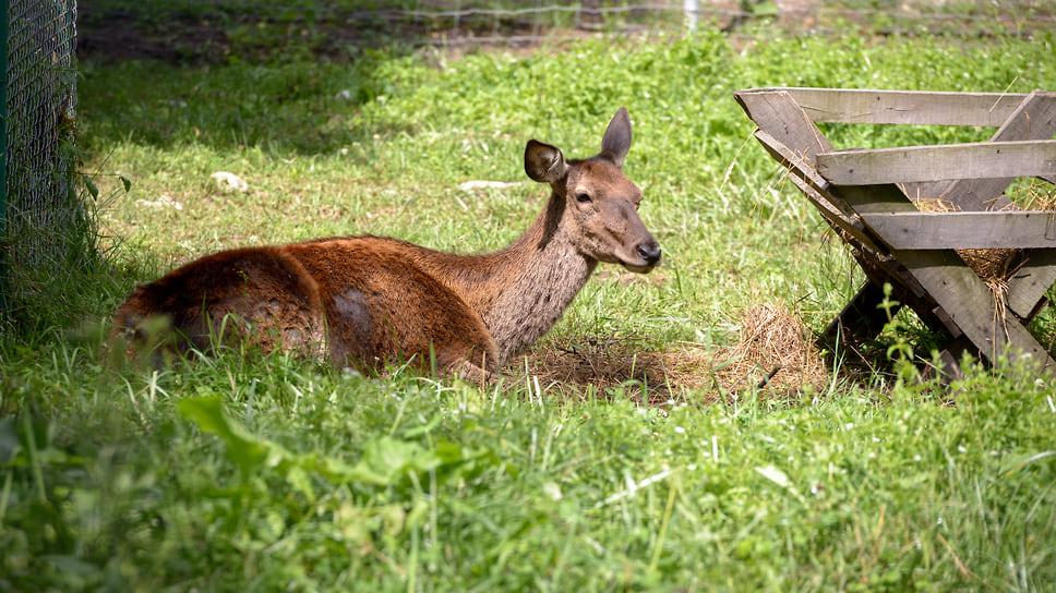Вольерный комплекс для диких животных создали для привлечения туристов и знакомства посетителей с представителями животного мира биосферного заповедника. Каждого вида животного здесь по паре, чтобы им было комфортно