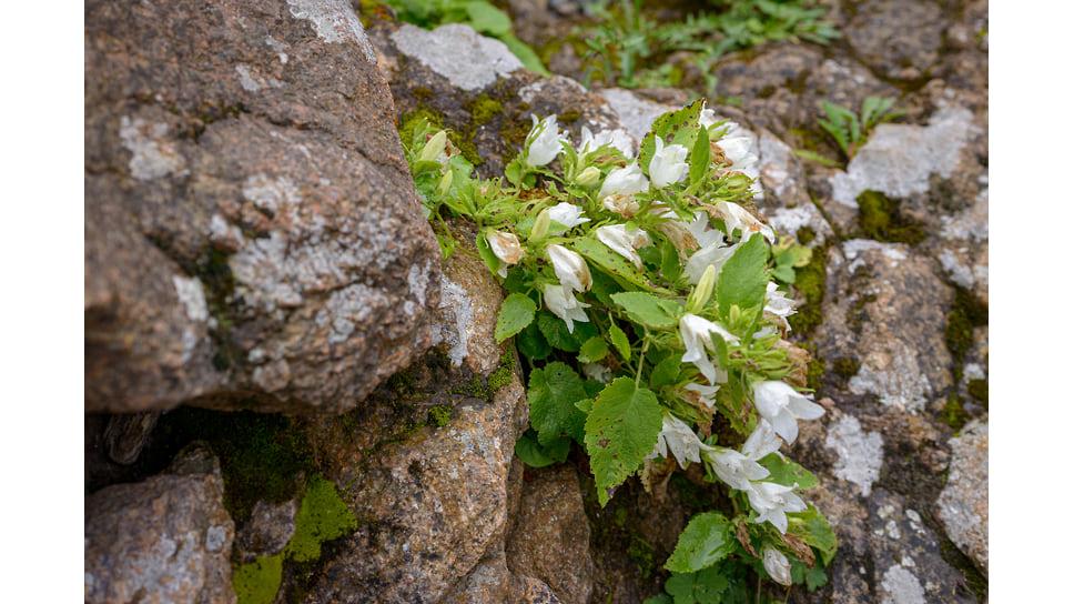 Флора в этих местах богата и разнообразна. На территории произрастает более 3 тысяч видов растений, в том числе и занесенных в Красную книгу. Вы можете встретить 40 разновидностей папоротника и более тридцати видов орхидей