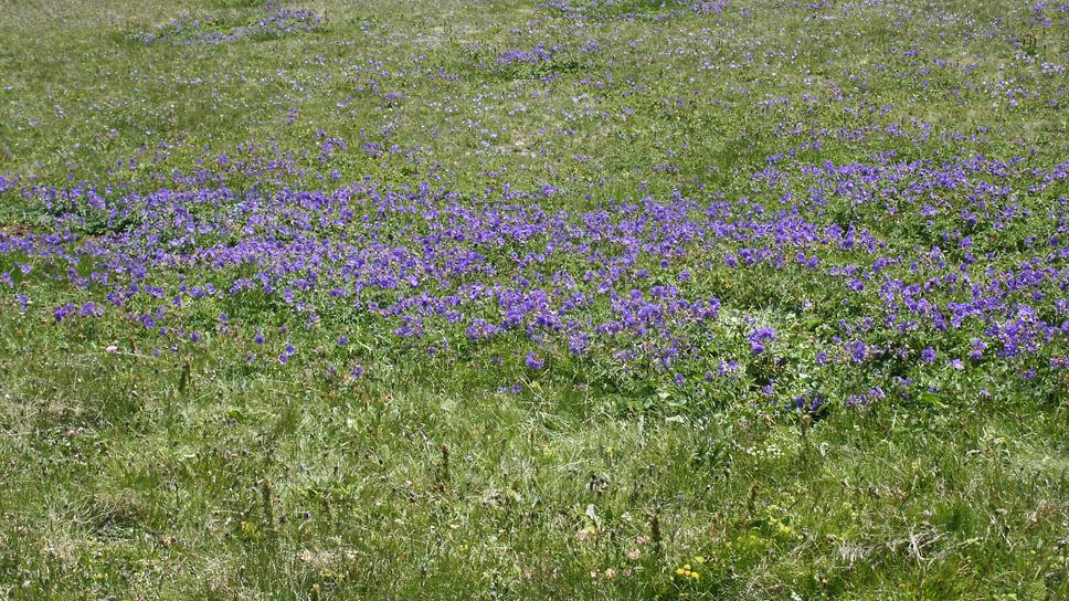 Альпийские луга. Здесь произрастают различные виды растений,  в том числе, краснокнижных. Около 30% всей фауны в заповеднике является эндемичными видами