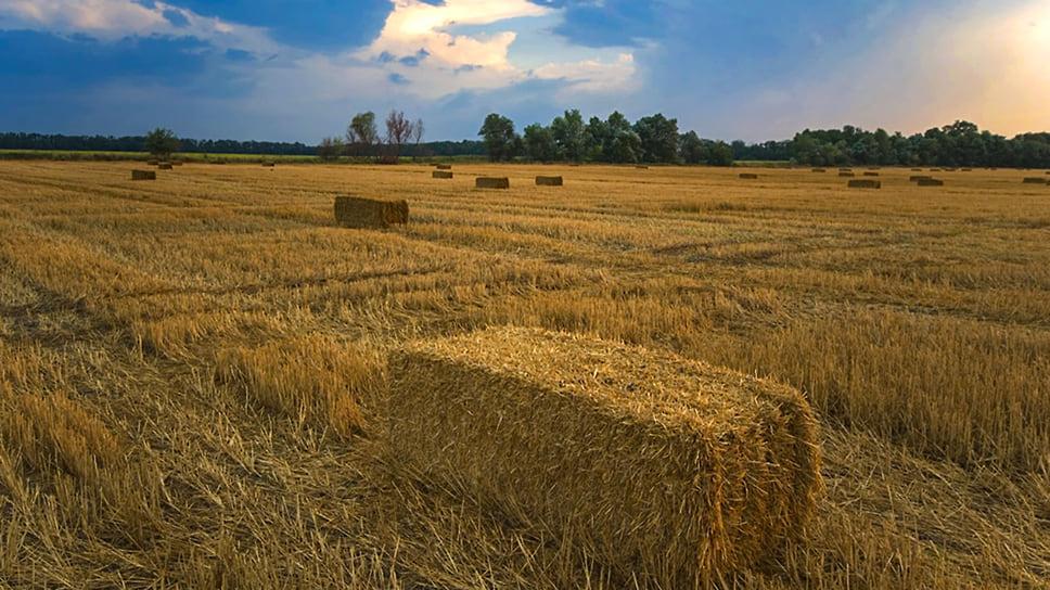 Динской район. Тюки сена на хлебном поле после уборки урожая на закате дня. Август 2007 года