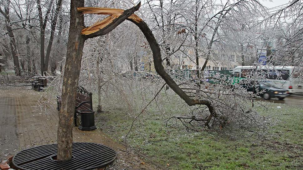 Ветка дерева в Мариинском сквере Краснодара не выдержала тяжести льда. Январь 2014 года