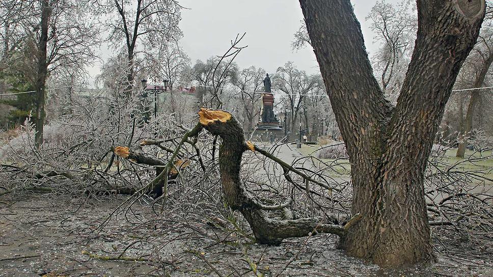 Сломанная под тяжестью льда ветка дерева в Екатерининском сквере Краснодара. Январь 2014 года