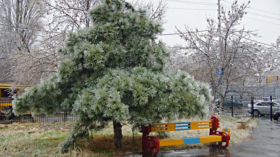 Лед в Краснодаре покрыл все - траву, деревья, скамейки, провода и опоры. Январь 2014 года