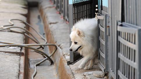 Где собака закрыта  / Обзор рынка