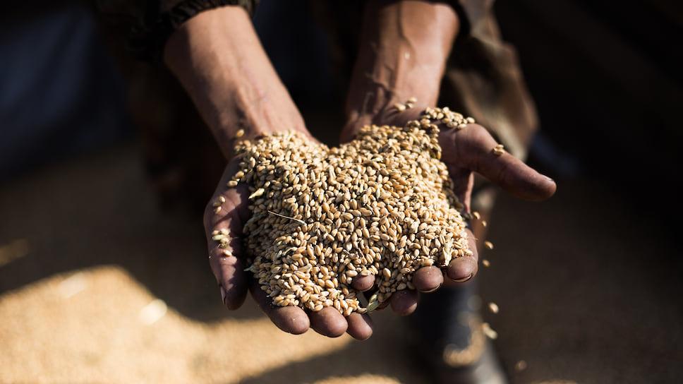 Цены на зерно, предлагаемые на внутреннем рынке, сейчас бывают выше, чем на экспорт