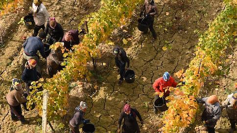 Виноделы стали ближе к земле  / За последние годы в Новороссийске удалось увеличить площади виноградников и наладить экспортные поставки вина