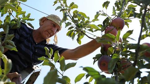 Расцветают яблони и груши  / В 2020 году на Кубани заложили более 1,5тыс.га молодых садов интенсивного типа