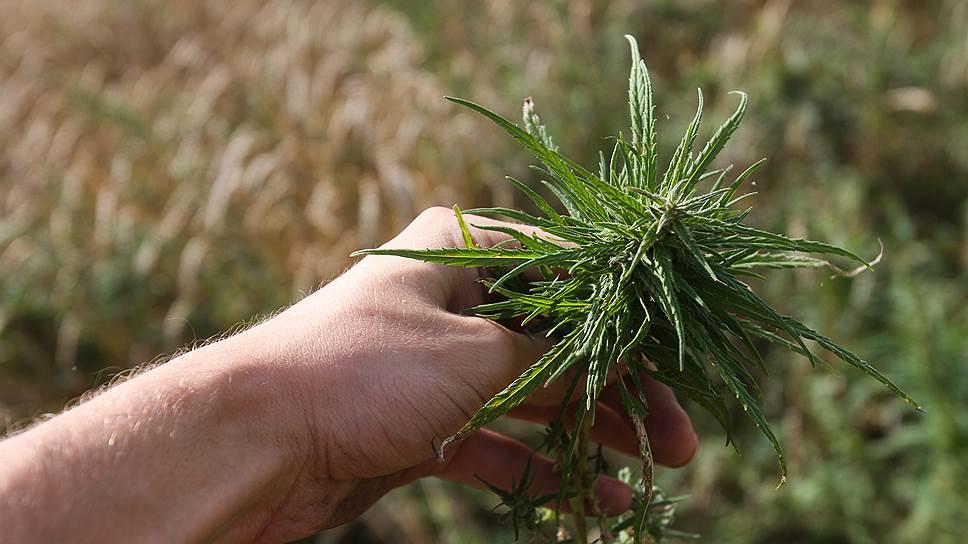 Где купить марихуану нижний новгород марихуана в екб
